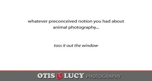 whatever your preconceived notion you had about animal photography toss it out the window