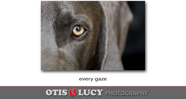 every gaze